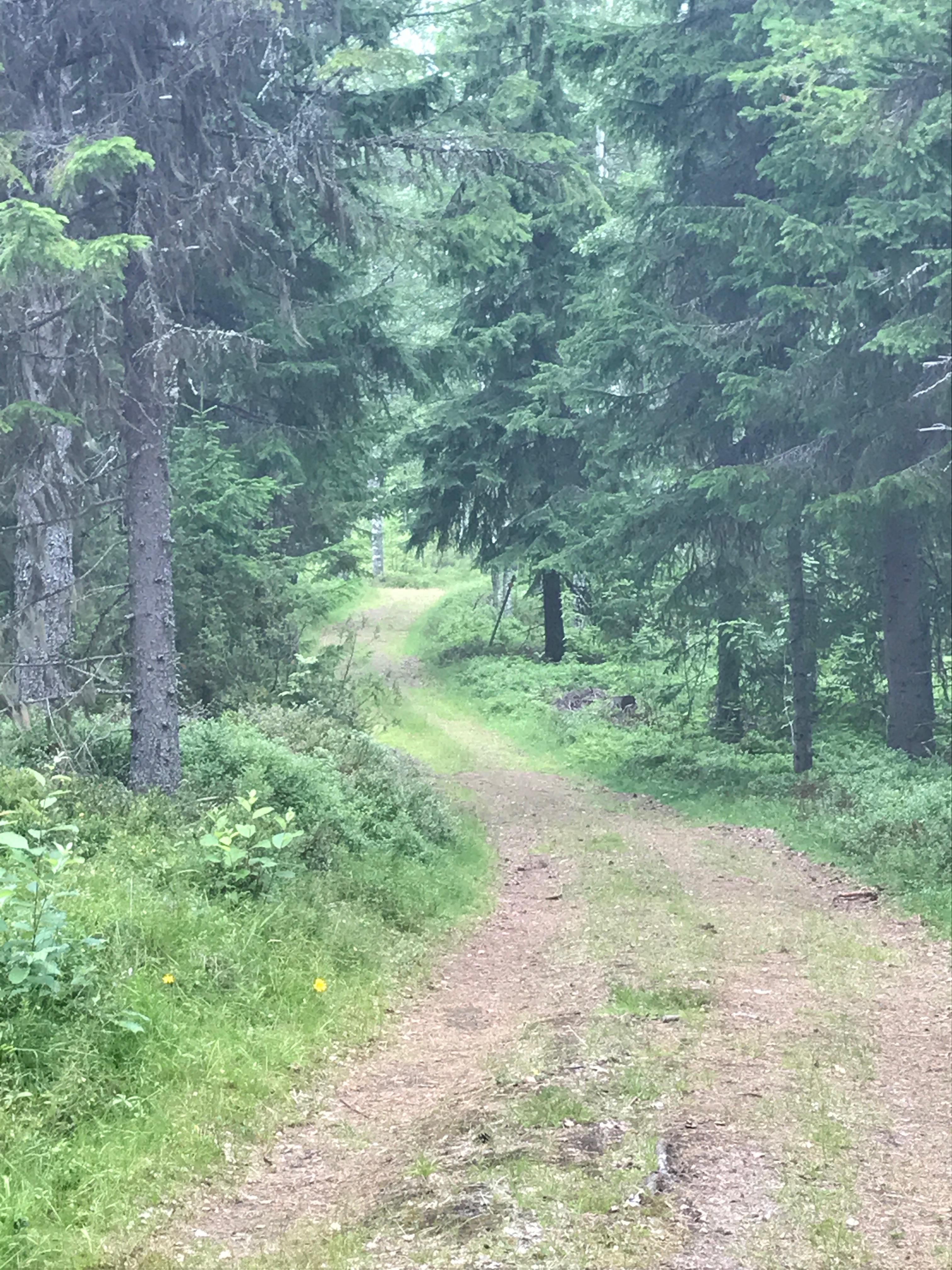 Slingrande skogsväg