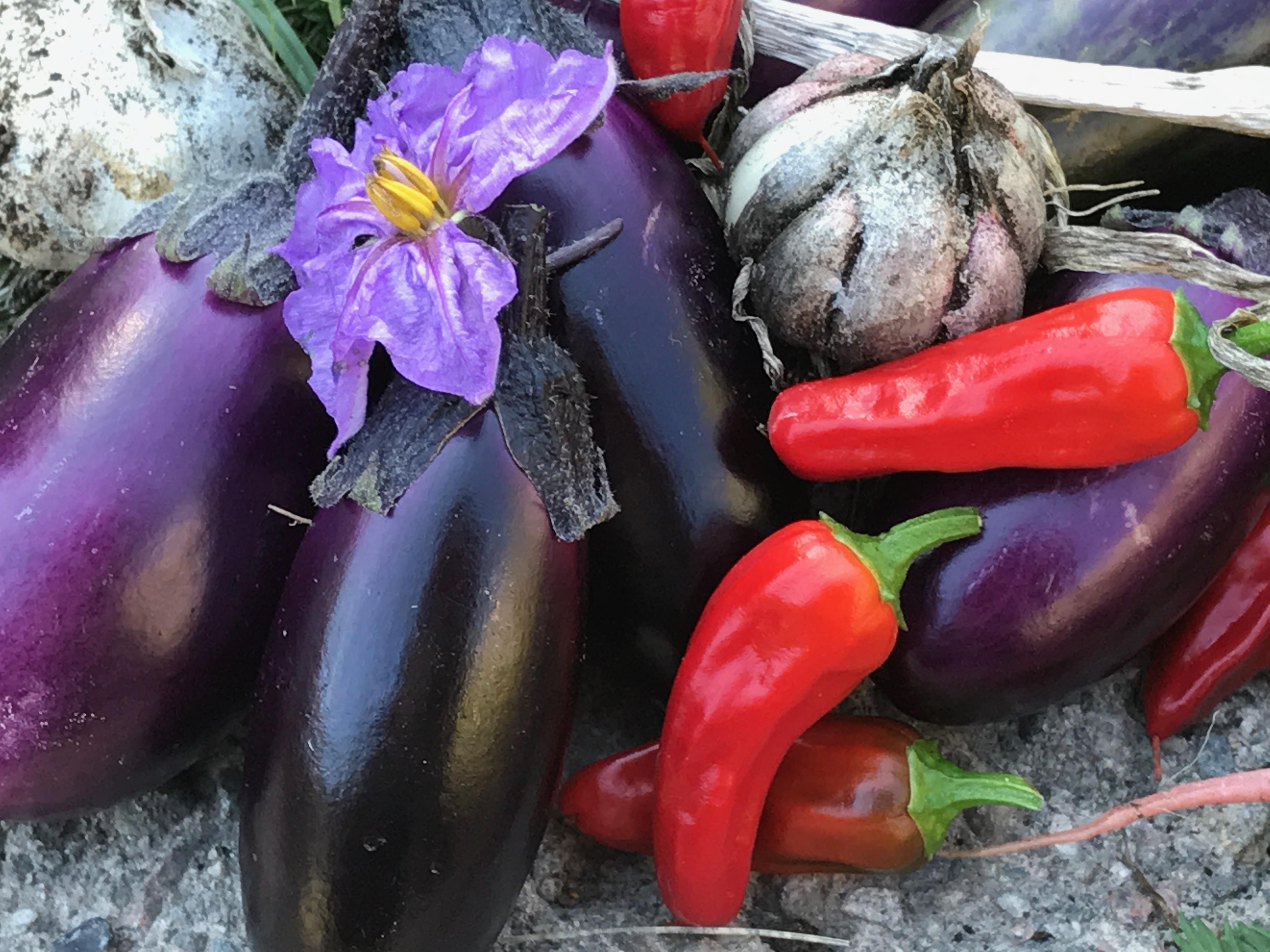 Auberginer, vitlök & chili