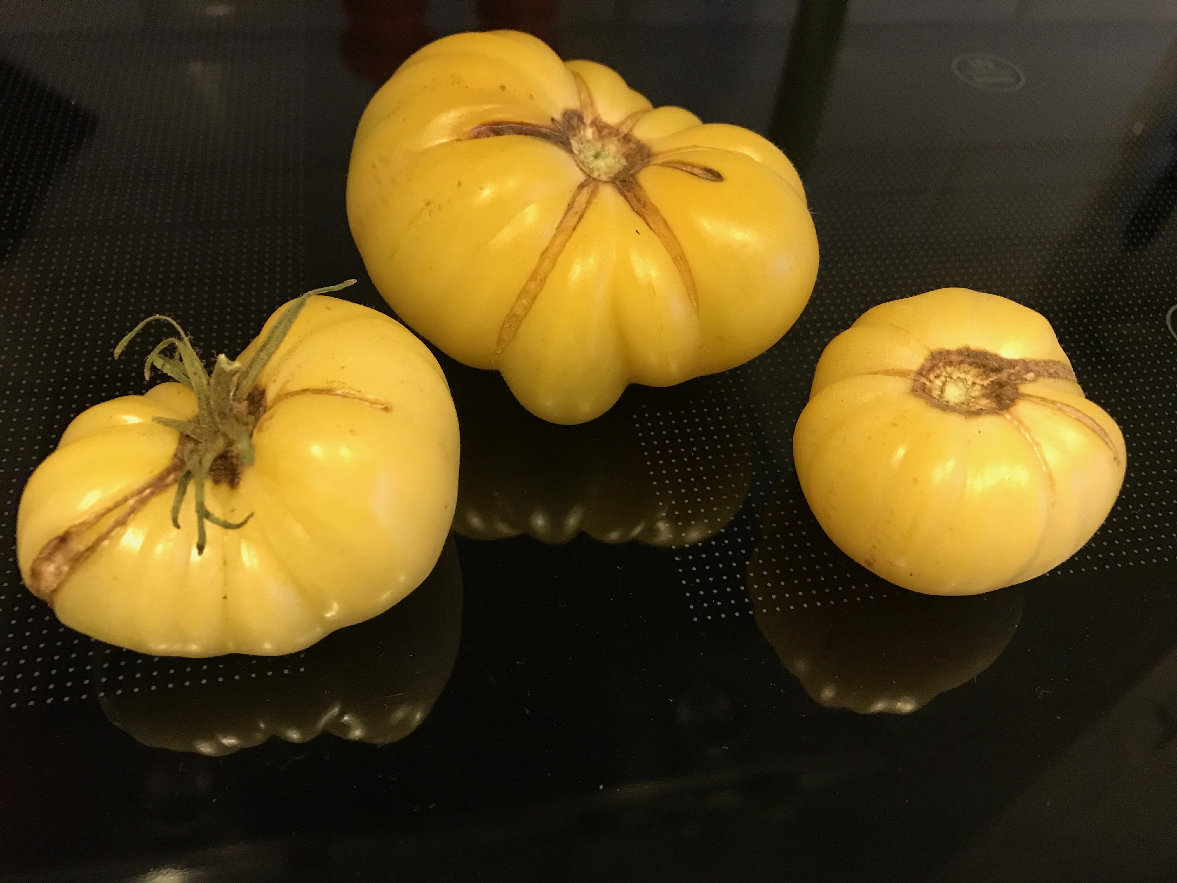 Gula tomater som har form som pumpor