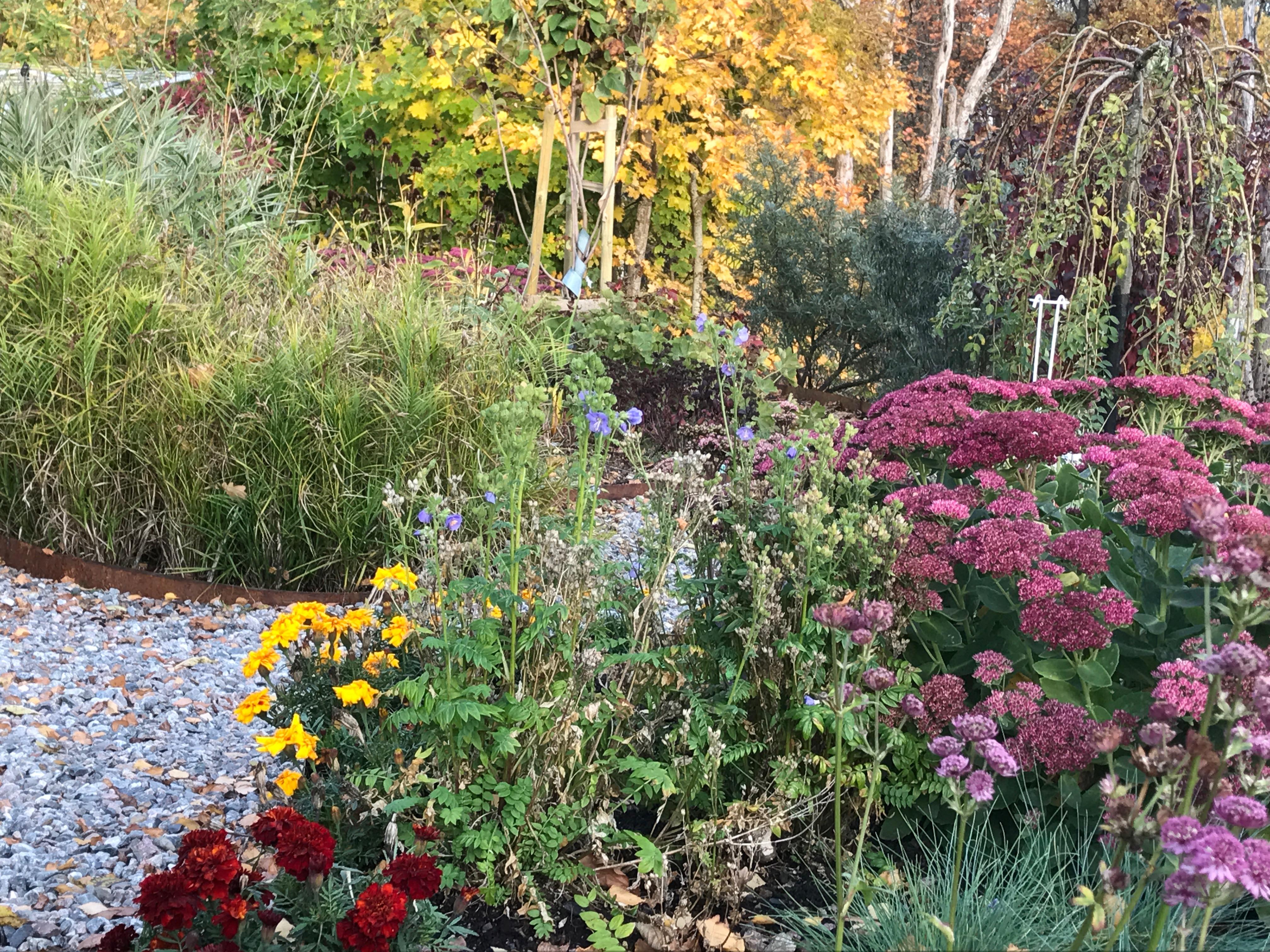 Höstbild från trädgården