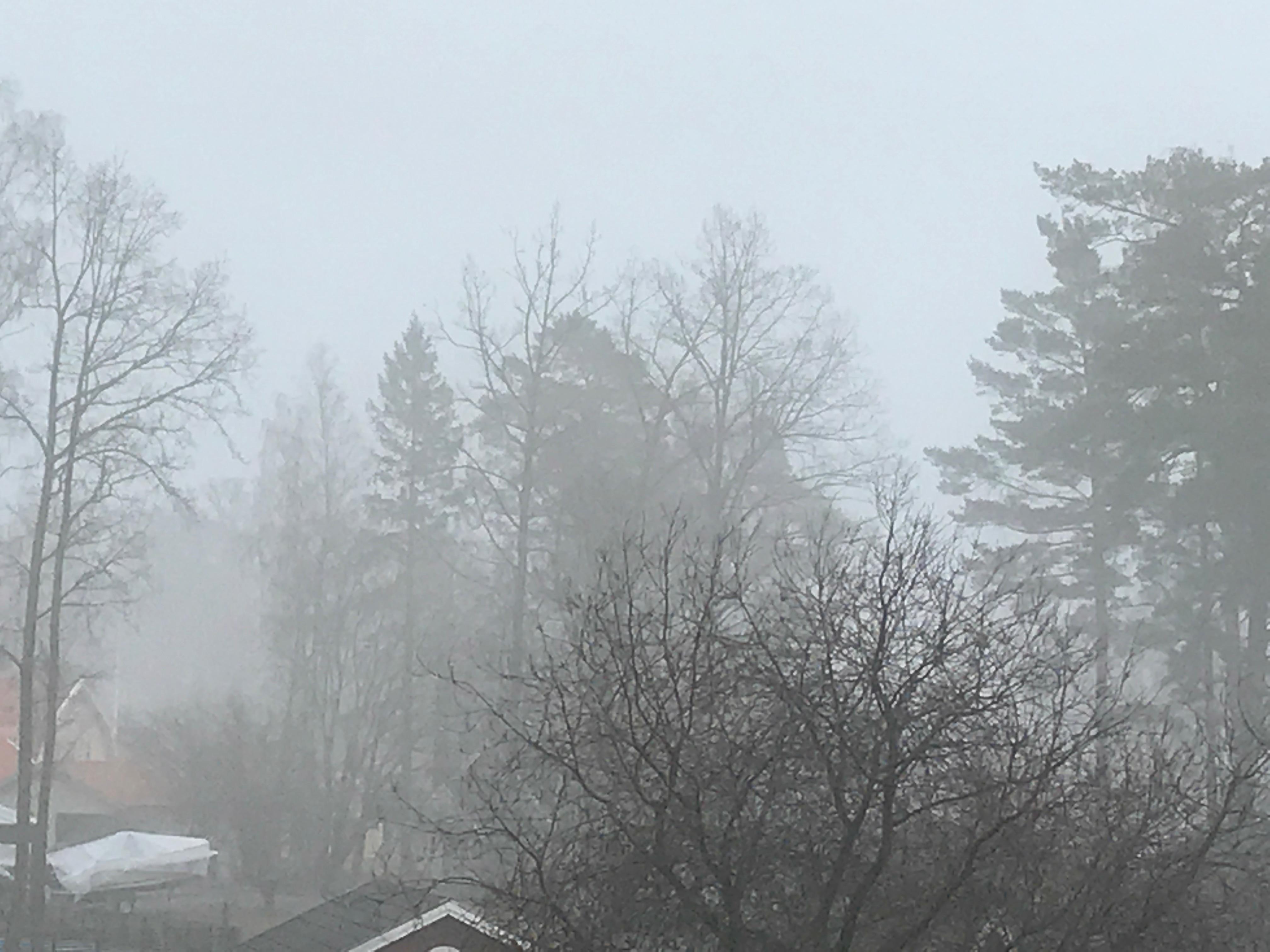 Landskap i dimma (väldigt grått)