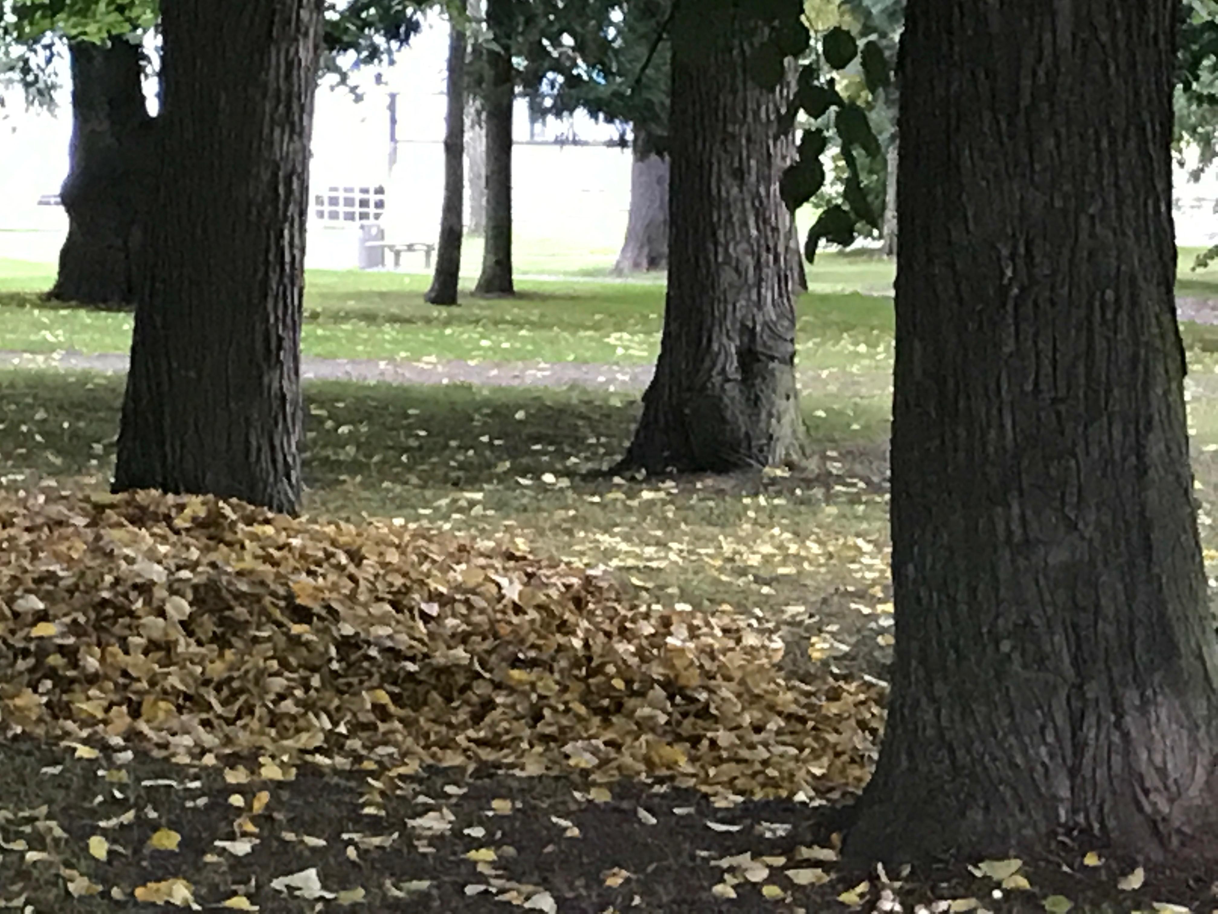 Hög med gula löv